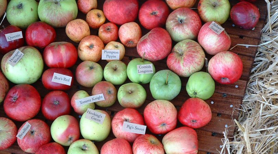 varietà di mele Cornish Orchards